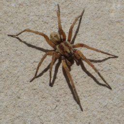 Уничтожение пауков в Майкопе
